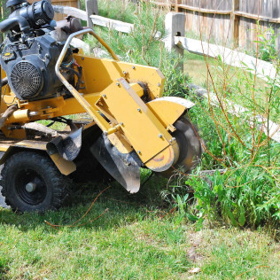stump removal bolingbrook il