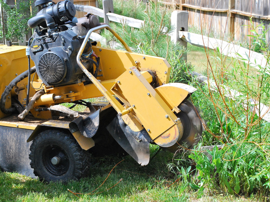 How to Remove Stumps and Improve Your Landscape